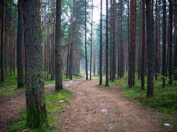 Удивительный лес в Луге