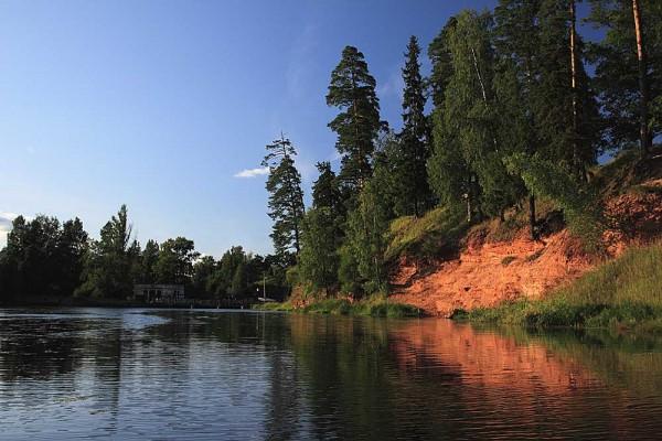 В реке Луга обнаружены трупы диких кабанов