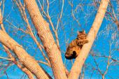 В Луге с дерева спасли котенка