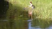 В Луге спасли застрявших в рыболовных сетях утят